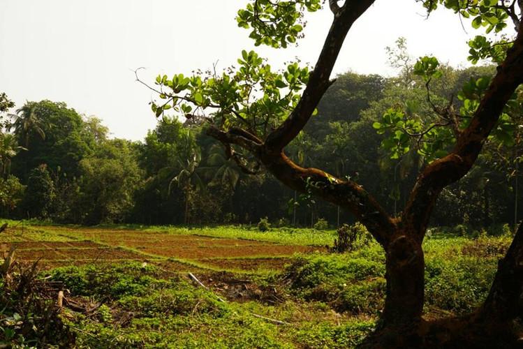 Mangal Farm IX.jpg