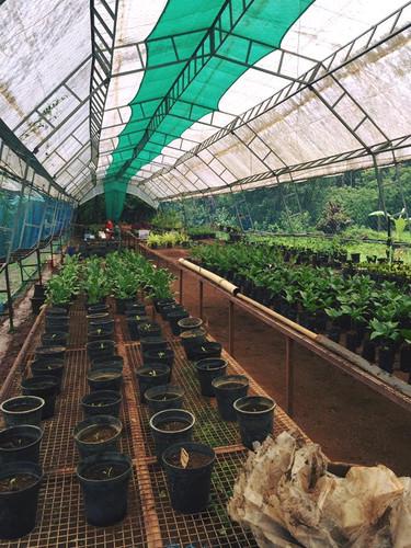 Farmstay the farm.jpg