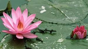 Lotus pose Padmasana mythology
