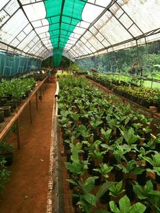 Farmstay the farm II.jpg