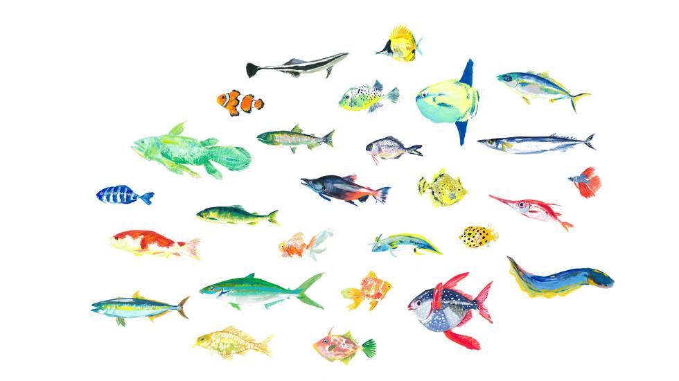 web_fish_bg4.jpg