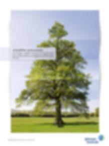 Tree-B.jpg