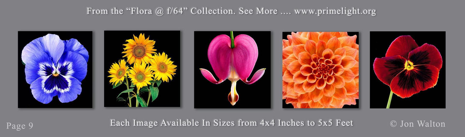 9 Flora.jpg