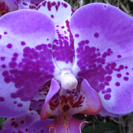 Orchid No.4