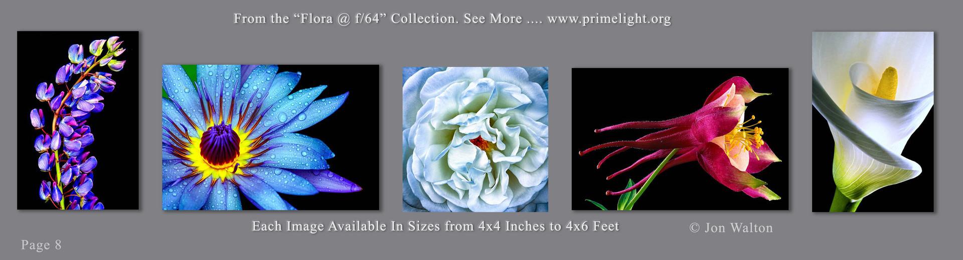 8 Flora.jpg