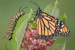 gosenica-metulj.jpg