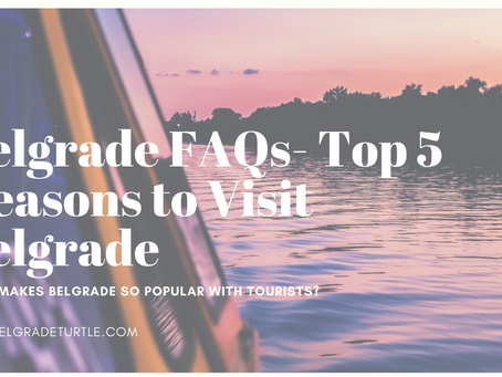What makes Belgrade so popular with Tourists? + Top 5 Reasons to Visit Belgrade