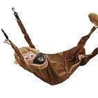 Hangin' Monkey.jpg