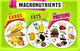 Macronutrients: Proteins, Fats, and Carbs
