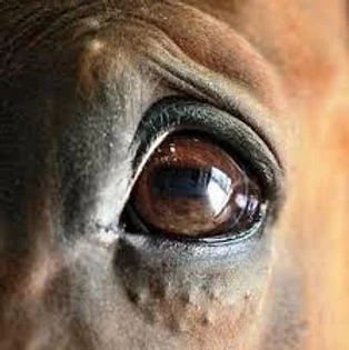 The Roadmap to PTSD in Horses