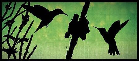BIRDS_II_COLIBRIS_RD_9x4_RVB72.jpg