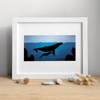 Les Baleines Bleues ⎪ 15.00 $ +