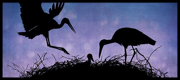 BIRDS_III_CIGOGNES_RD_9x4_RVB72.jpg