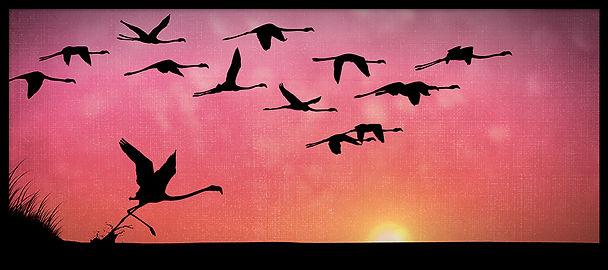 BIRDS_I_FLAMANTS_RD_9x4_RVB72.jpg