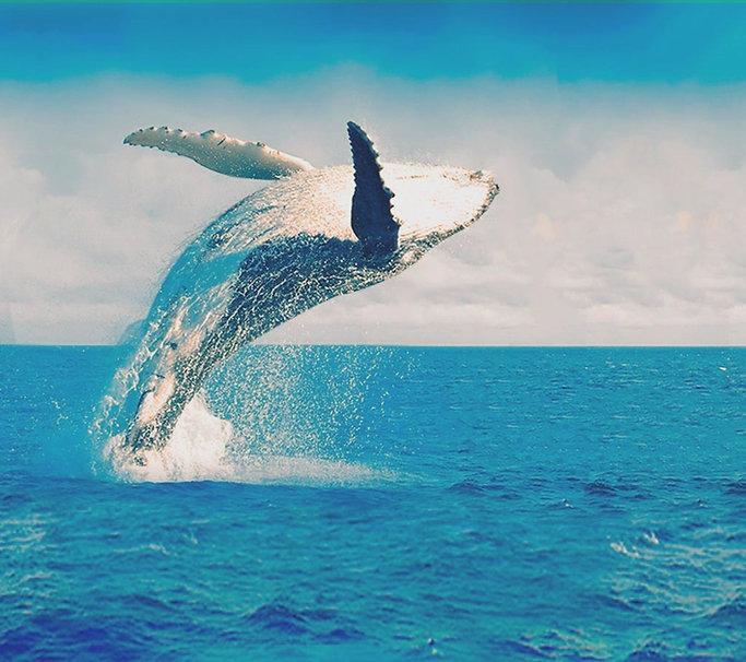 baleia porto seguro_edited.jpg