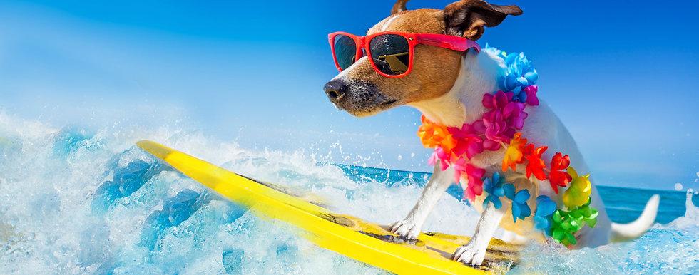 Posso-levar-meu-cachorro-à-praia-1.jpg