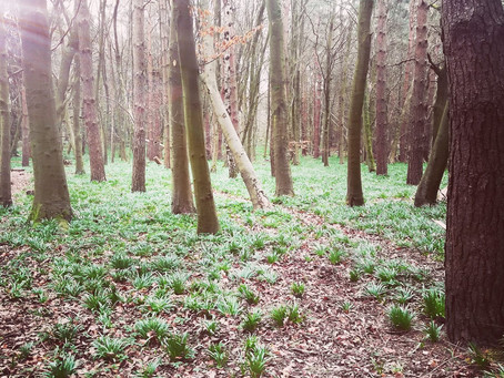 All Things Bluebells & Interesting facts About Them