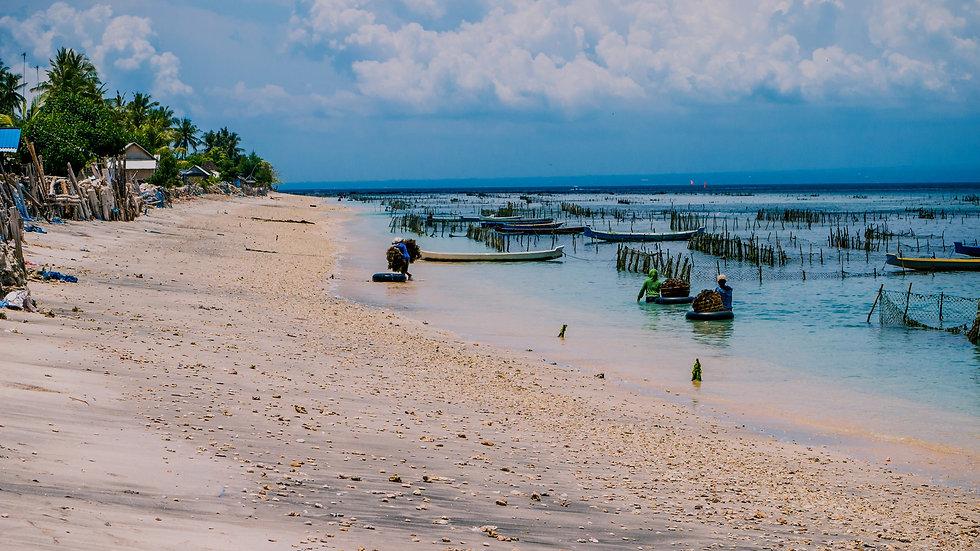 seaweed-plantation-farm-by-low-tide-in-n