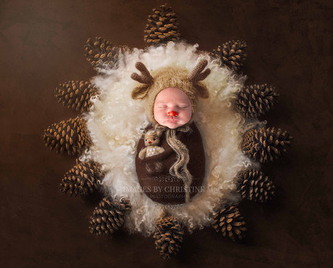 Newborn Christmas deer