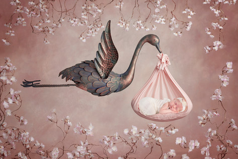 Newborn stork composite