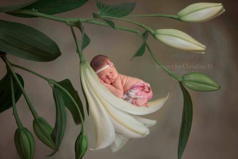 Omaha custom newborn wall art