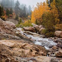 Fall Colors in RMNP Colorado