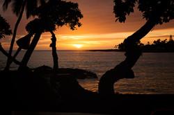 Sunset  between the trees Hawaii