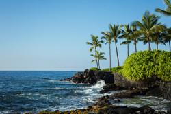 Palm trees ocean Hawaii