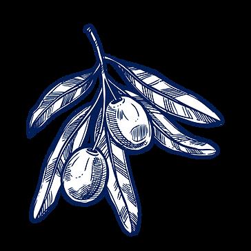 branche-olivier-chercheurs-d-or-vert-2.p
