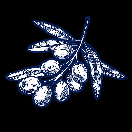branche-olivier-chercheurs-d-or-vert-3.p