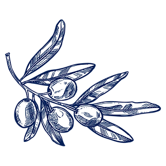 branche-olivier-chercheurs-d-or-vert-1.p