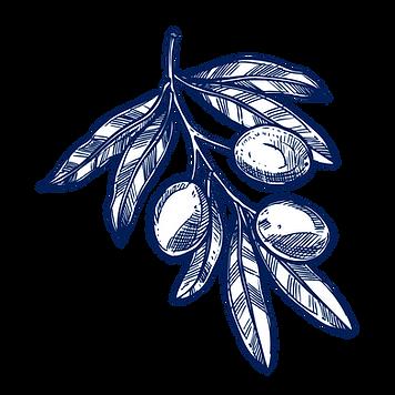 branche-olivier-chercheurs-d-or-vert-4.p