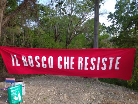 Festa del 25 Aprile con il bosco che resiste