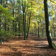 De herfst in het bos.