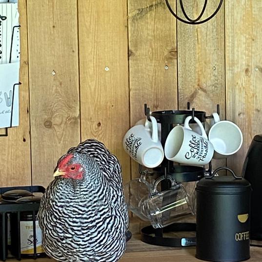 Deze dame zorgt voor een lekker eitje bij je ontbijt!