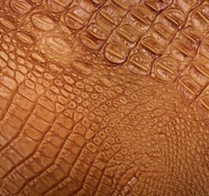 Wild Croc Mandarin