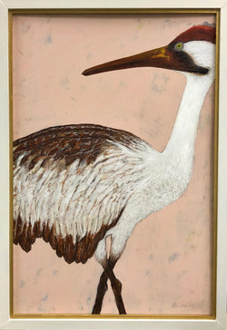 Louisiana Whooping Crane
