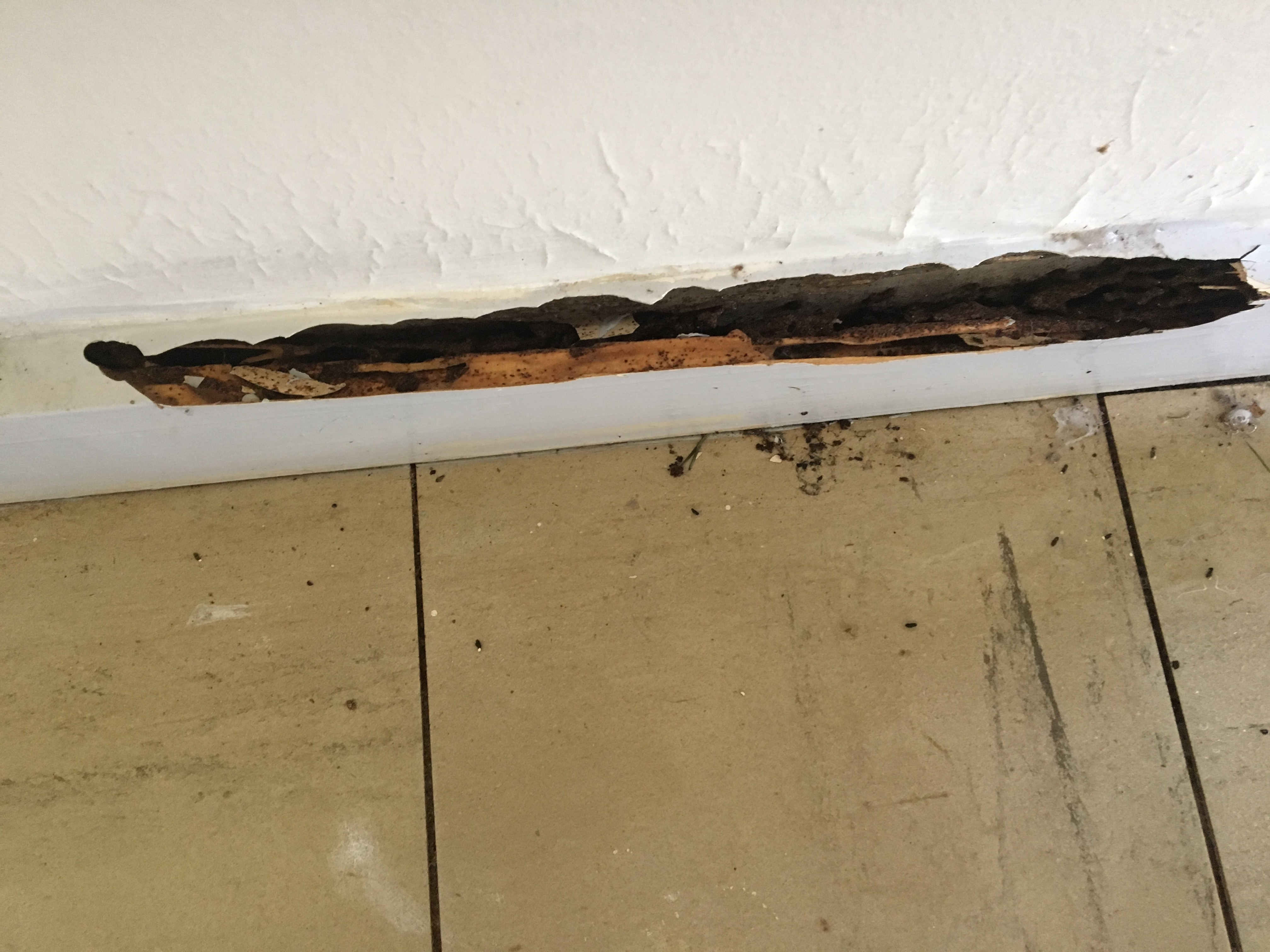 Skirting board damage in Townsville