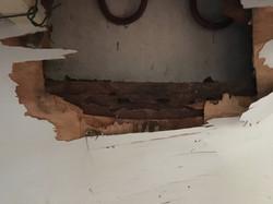 Mastoterme Termite damage in kitchen