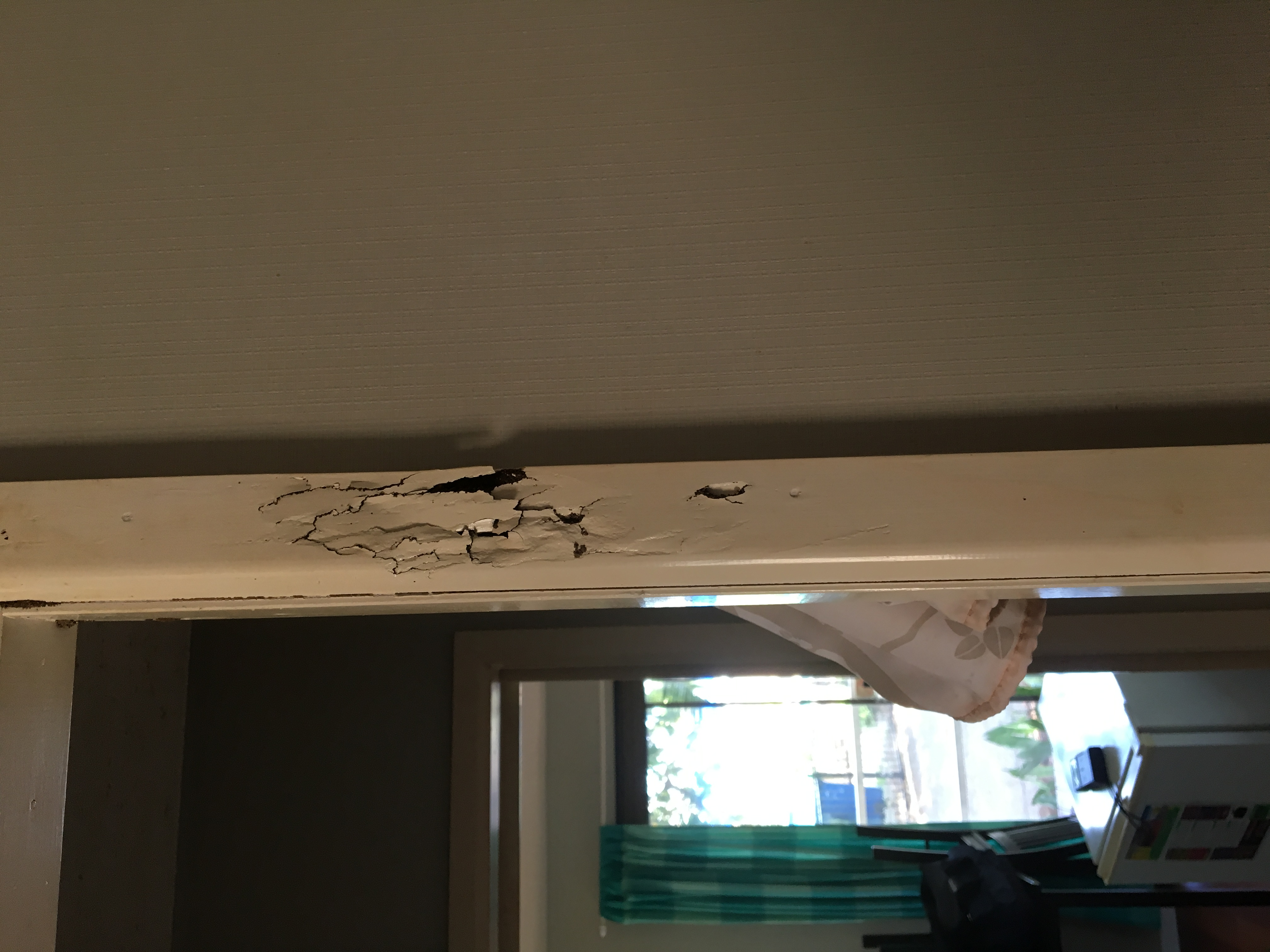 Door frame damage by Termites