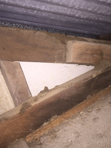Roof rafters - Termite damage in Townsville