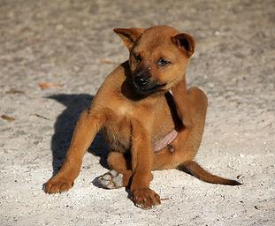 dog-1559746_1920.jpg