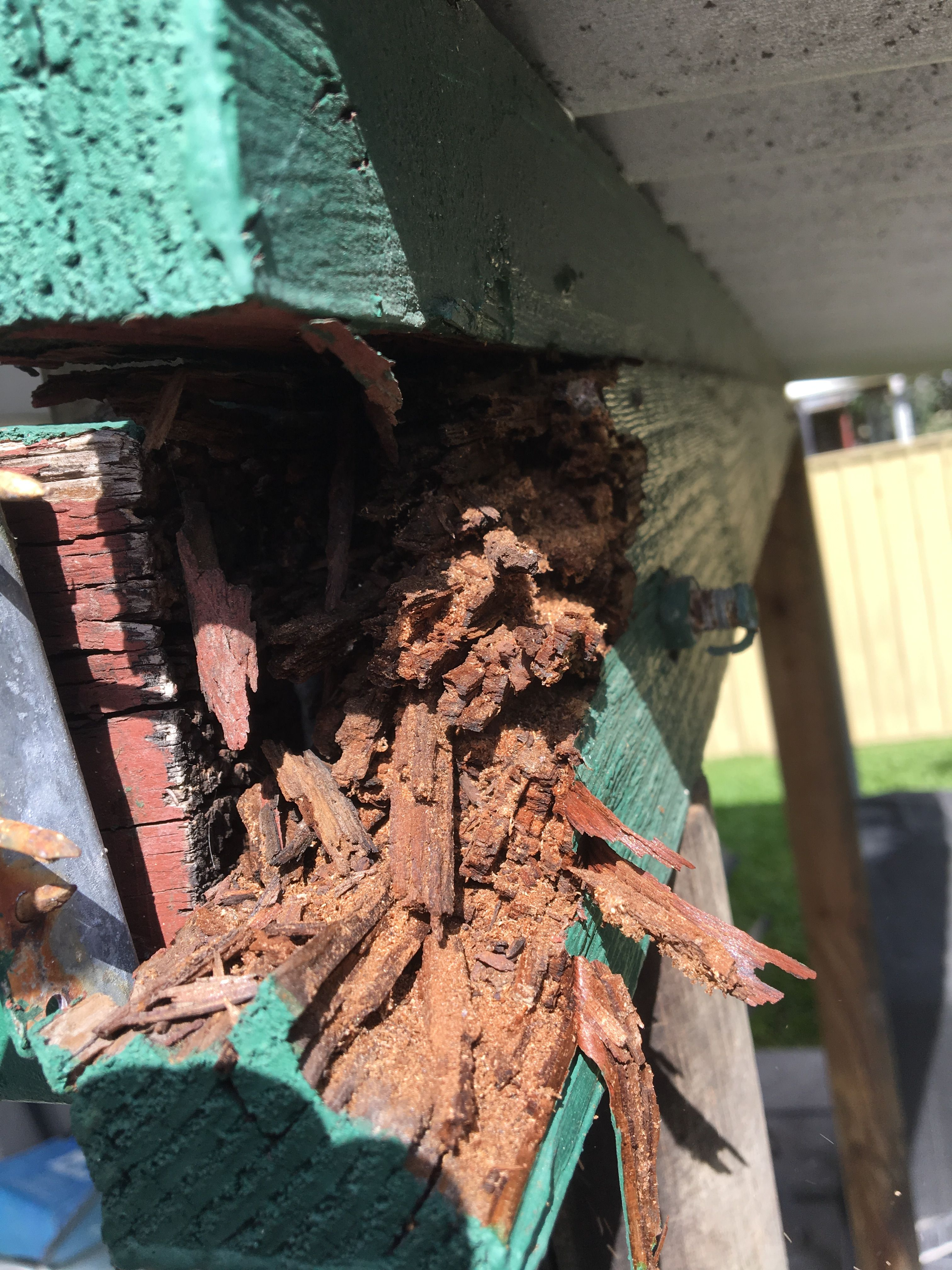 Termite damage in bearer