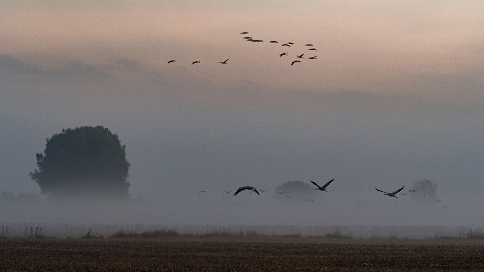ROBIN Patrick - Migrations