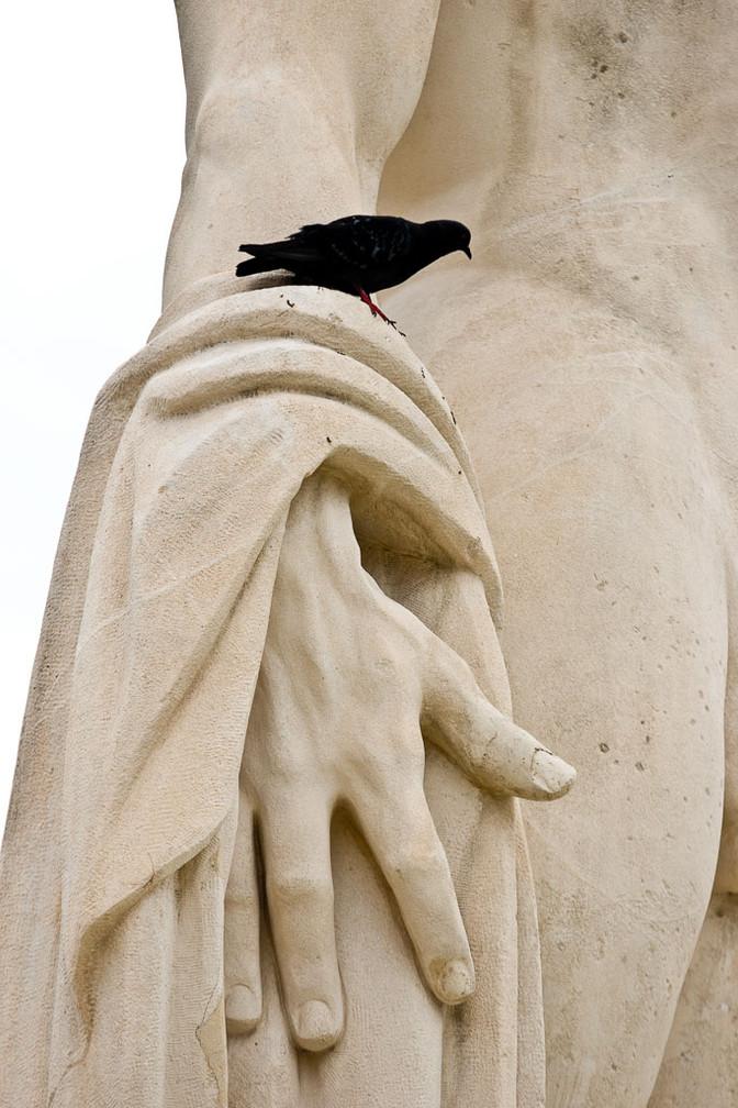 LECHEIN Dominique - Pigeon sur Statue