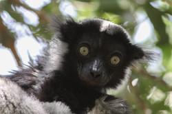 Madagascar 2011 0284