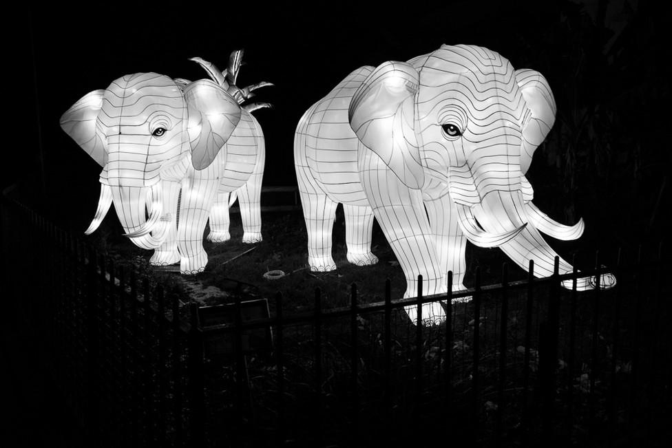 LALLOZ Sylvain - Les Eléphants