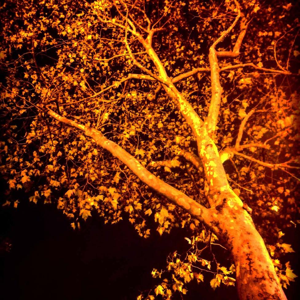 arbre cpca