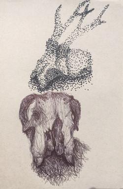 Pupil Skull observational drawing