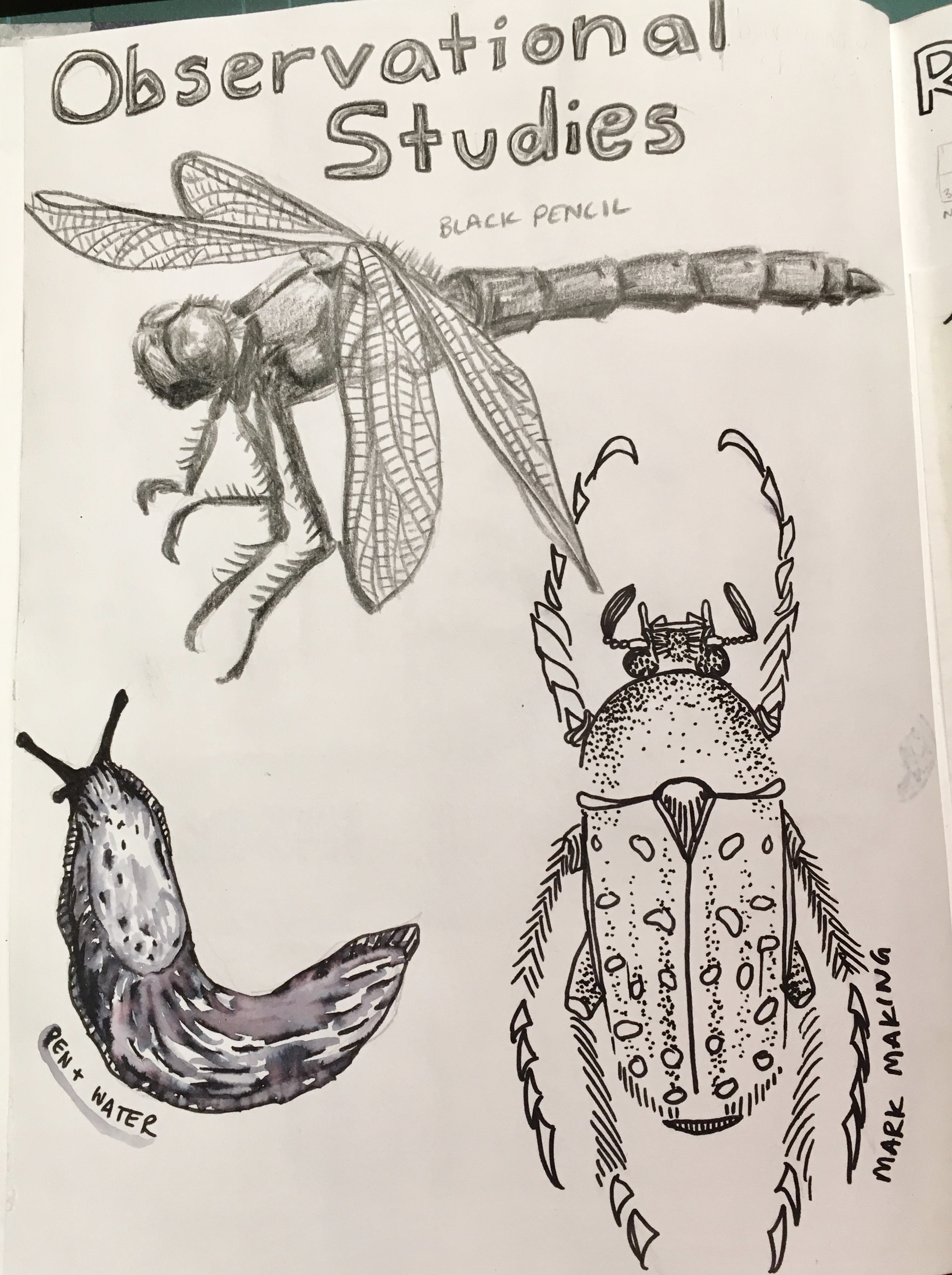 Exemplar Insects